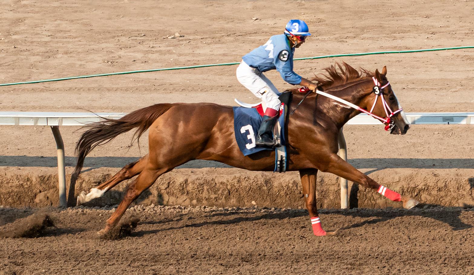 july-31-horse-IMG_9570